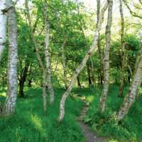Sherwood Forest (as it looks today)